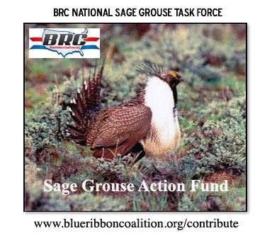 awww.sharetrails.org_sites_default_files_Sage_Grouse_action_fu1589f86f693038e35a60c8620058bcda.jpg