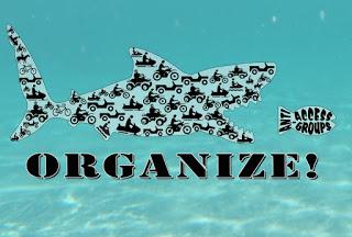 brc_organize_shark_web.jpg